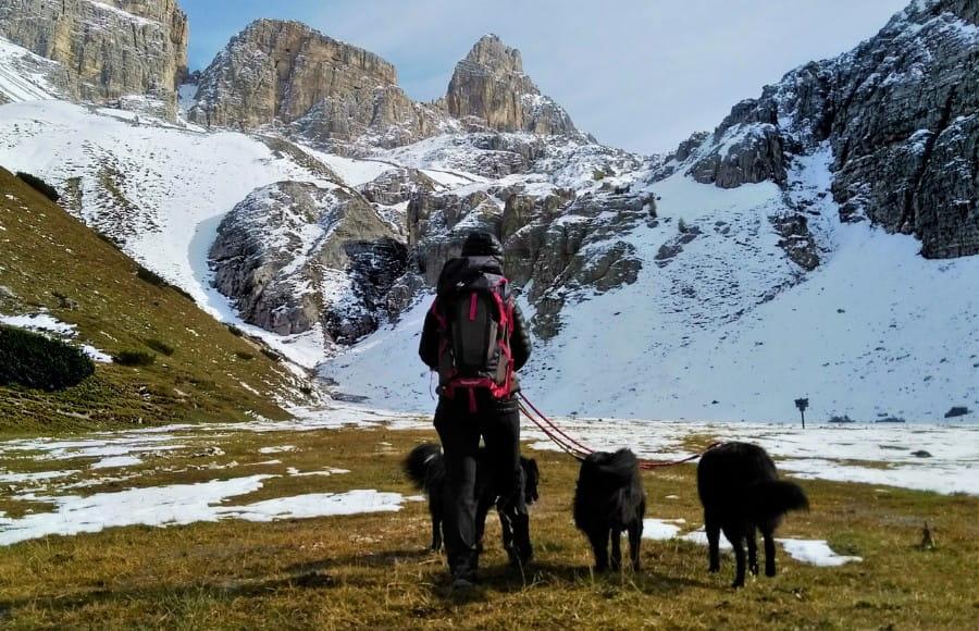dog trekking escursione con i cani in montagna