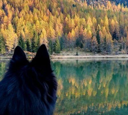 cane in montagna guarda lago