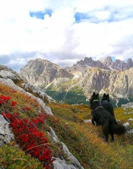 cani in montagna guardano panoama