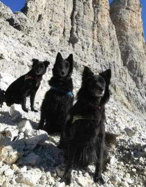 dog trekking training Lecco